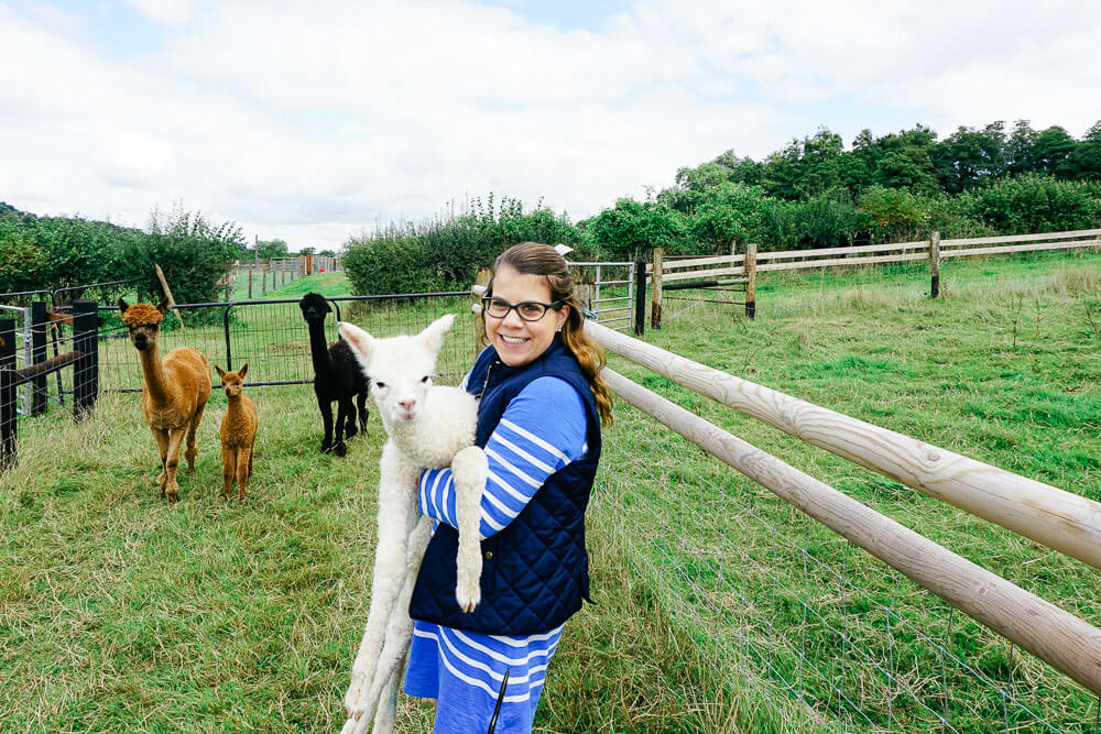 Alpaca Farm in the Cotswolds via Wayfaring With Wagner