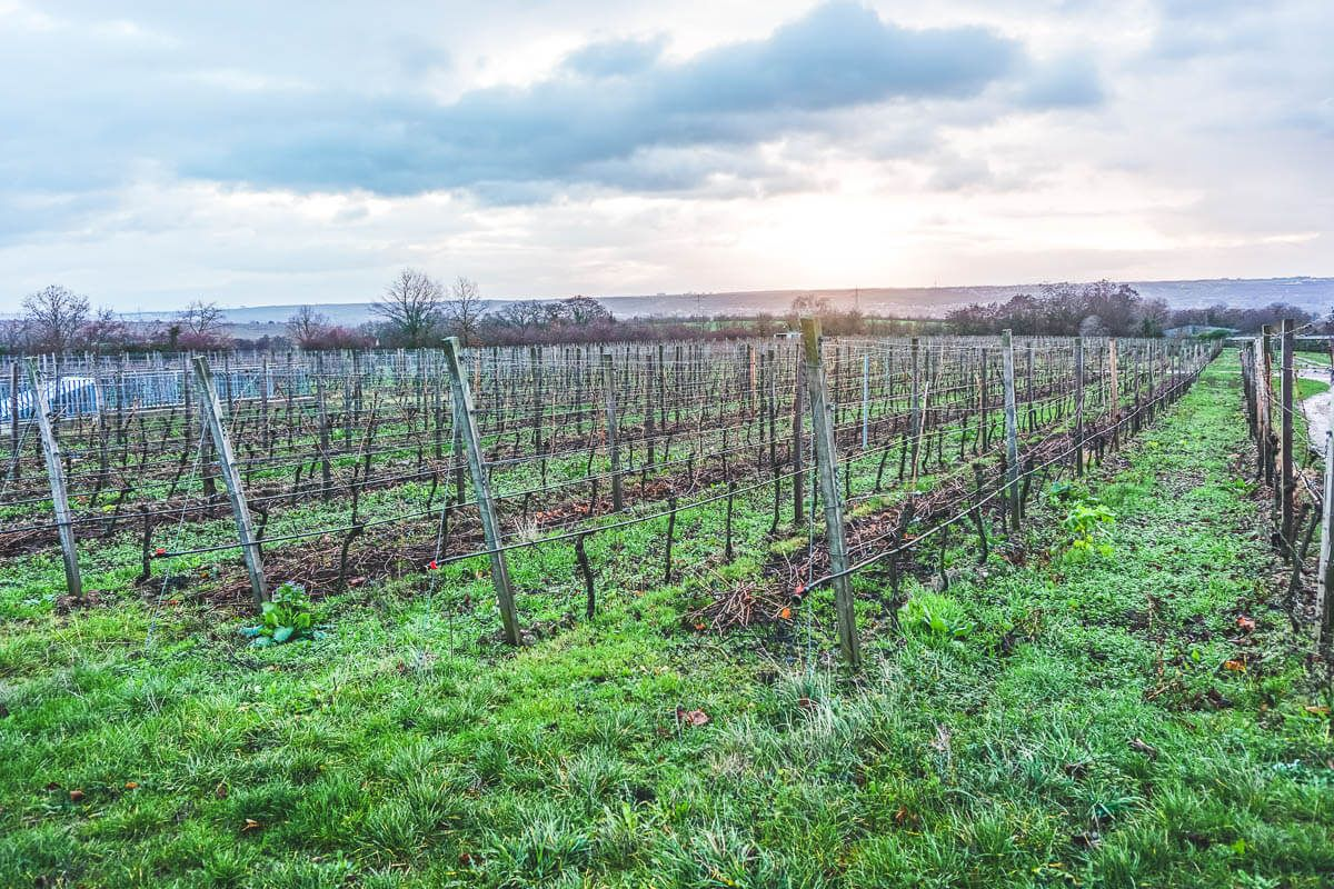 Winter Wine Trip from Mainz to Rheingau via Wayfaring With Wagner